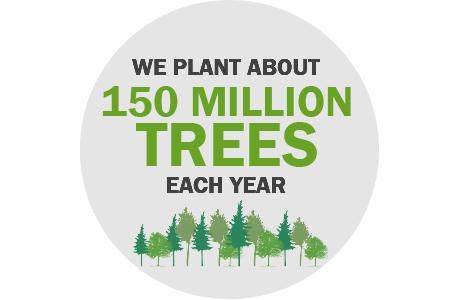 Sustainable Forestry :: Weyerhaeuser