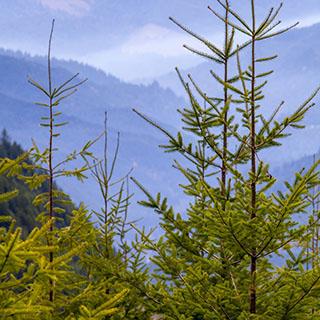 Environment - Thumbnail.jpg