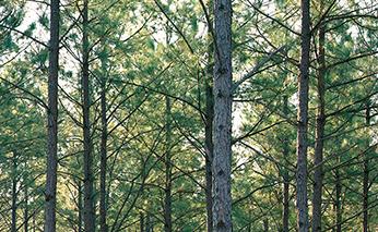 Photo of Weyerhaeuser timberlands