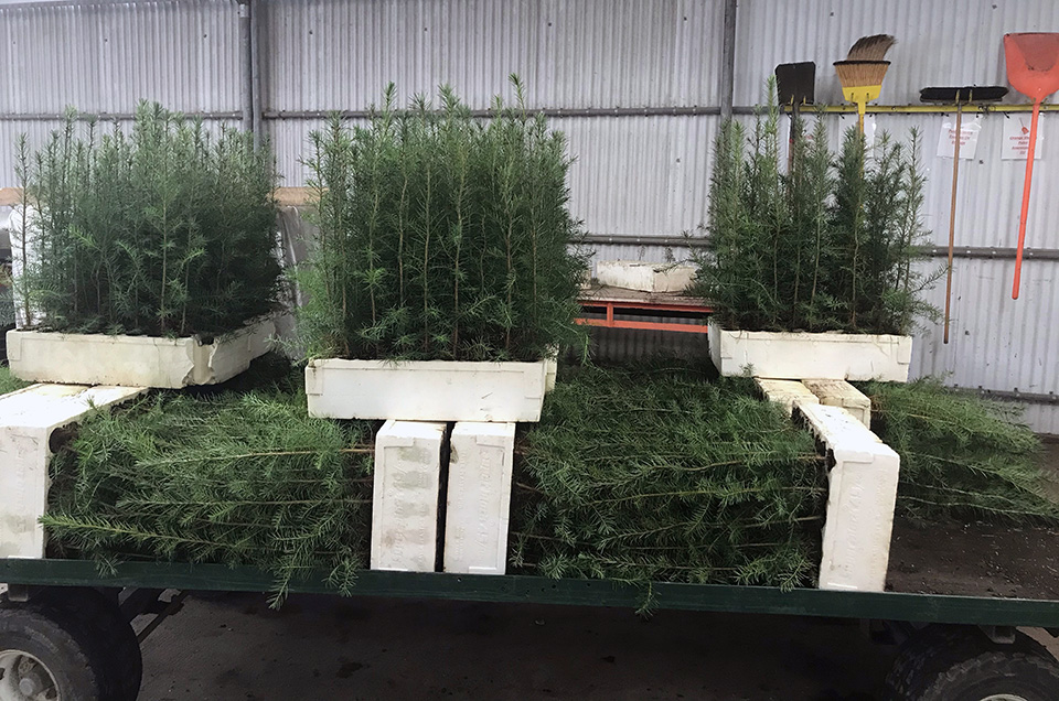 rochester-seedlings.jpg