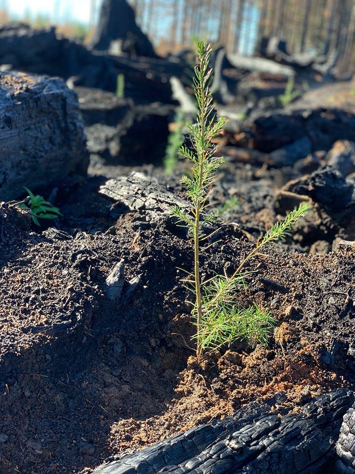 first-seedling.jpg
